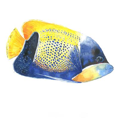 pesce giallo e blu di zummy