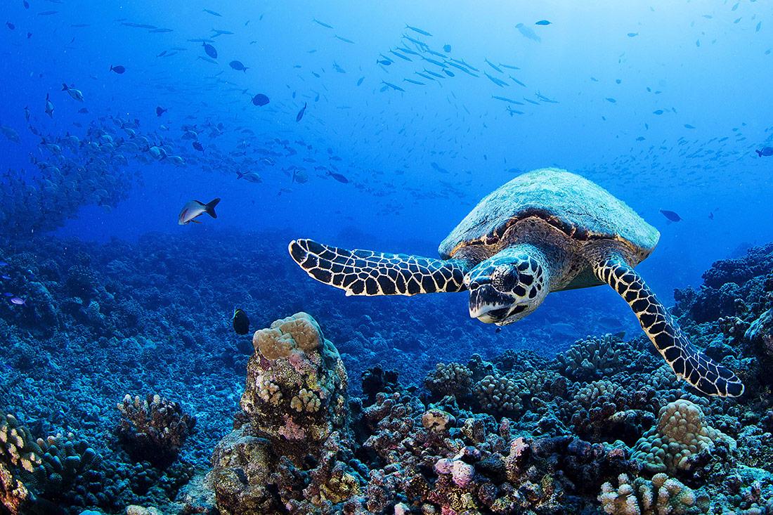 Tartaruga marina e la sostenibilità di Zummy