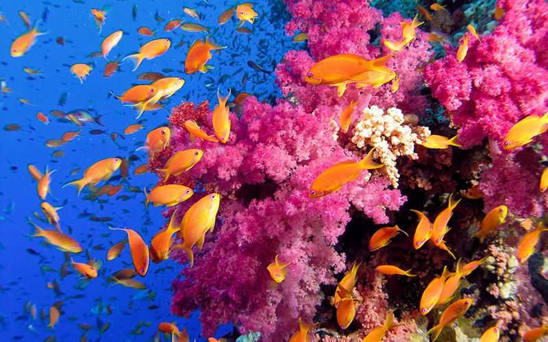 Oceano e coralli di Zummy