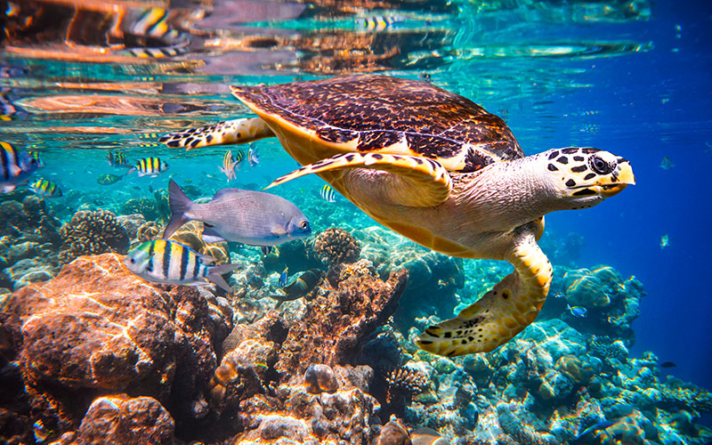 tartaruga marina nell'oceano