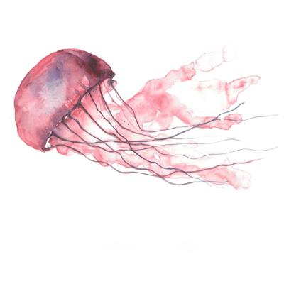 medusa zummy