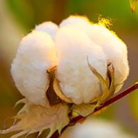 tondo zummy cotone organico