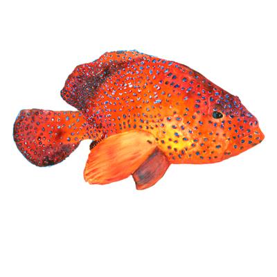 pesce rosso di zummy